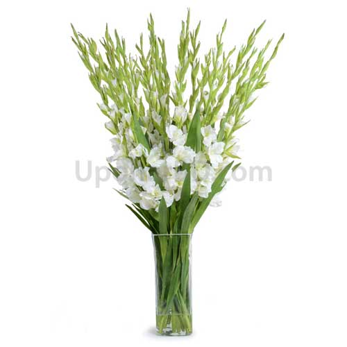 White Gladiolus with Glass Vase