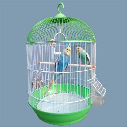 Pair of Budgerigar bird with cage