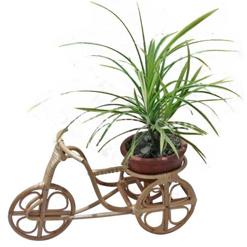 Live Plant in a Handicraft Rickshaw