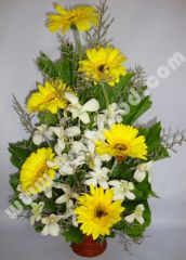 Gerbera and orchid mix