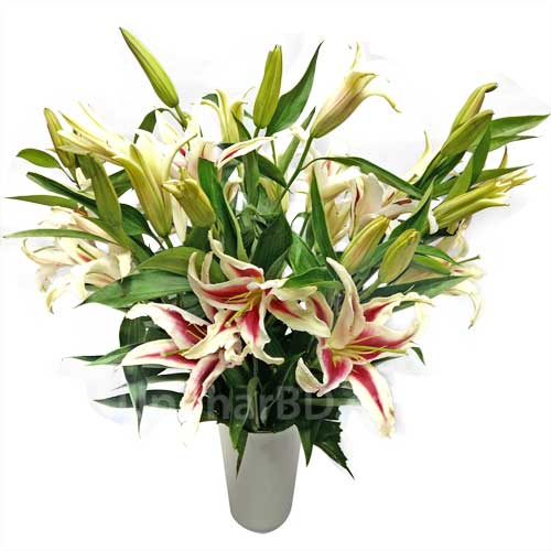 Variety of Lilies