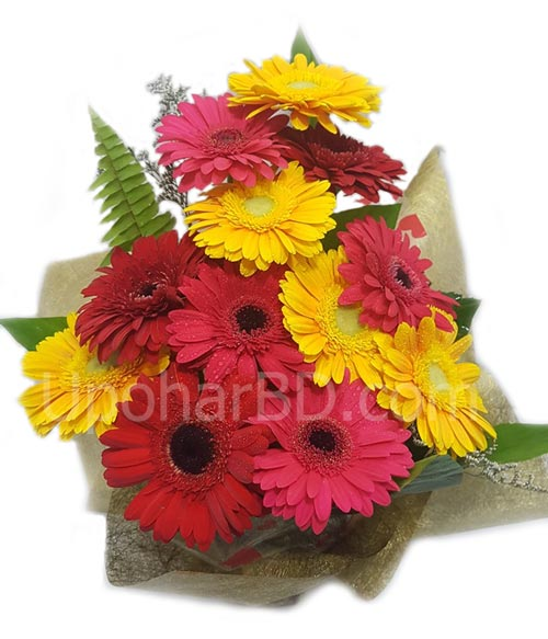 Collection of Gerbera