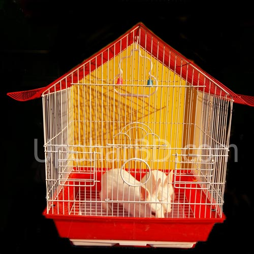 Pair of rabbit with cage