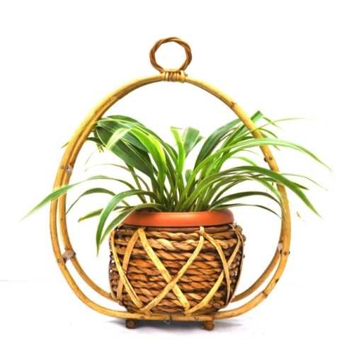 Hanging Spider plant pot