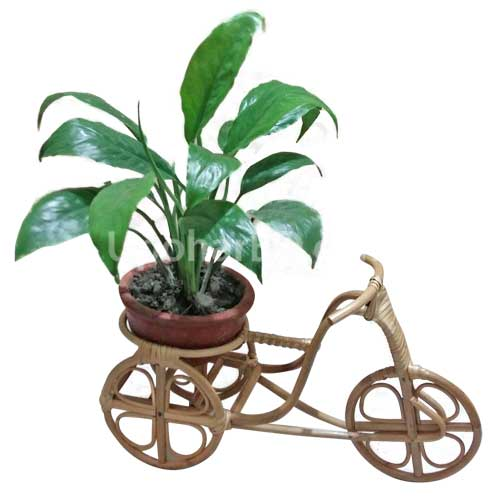 Live Plant in a Rickshaw