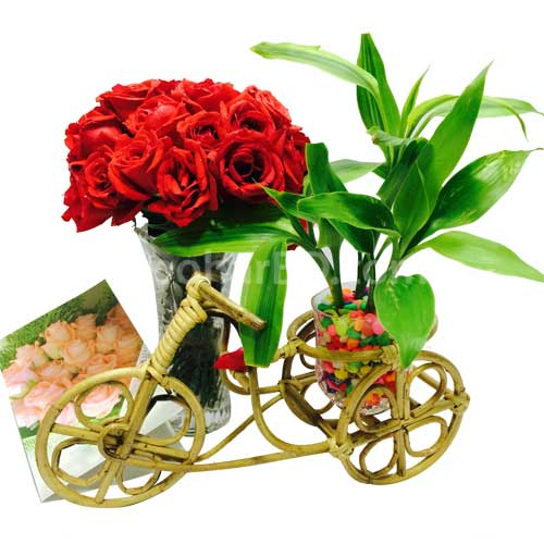 Gift with live plant and roses in a vase