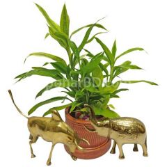 Live plant with bronze handicrafts