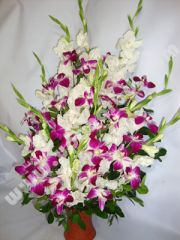 Gladuolus and orchid mix