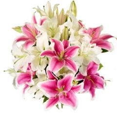 Multi-Color Lily arrangment
